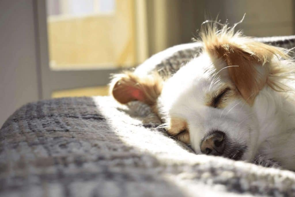 pet euthanasia at home with sedation