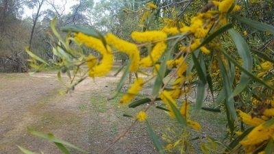 Lawnswood Dog Cemetery Wildflowers